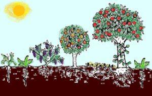 Schema food forest